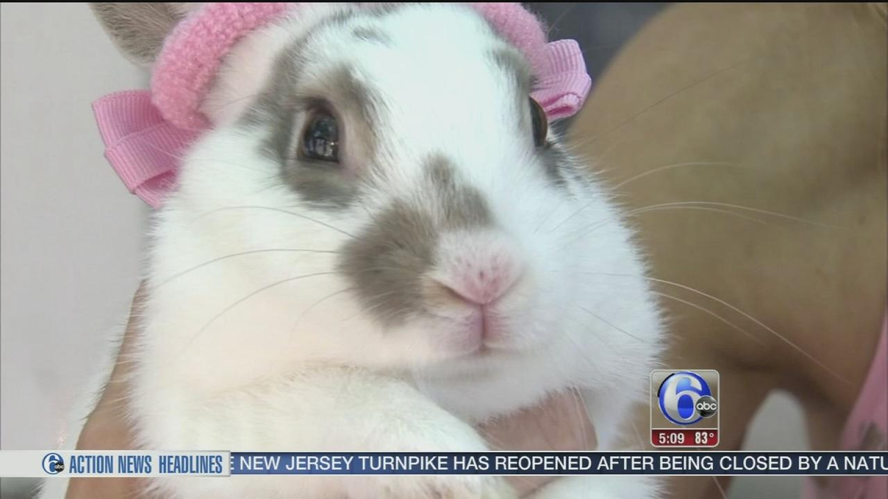 VIDEO: Abandoned bunnies find a home at NJ sanctuary