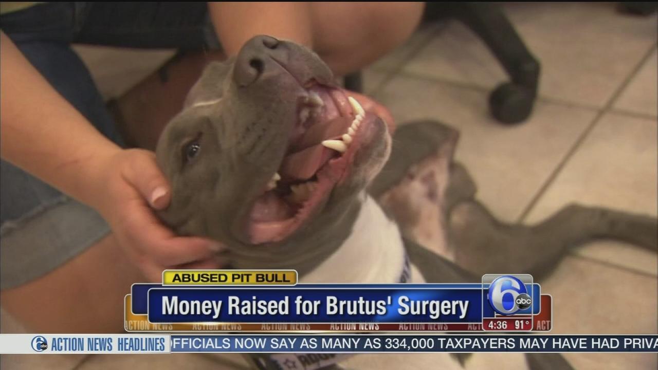 VIDEO: Brutus update
