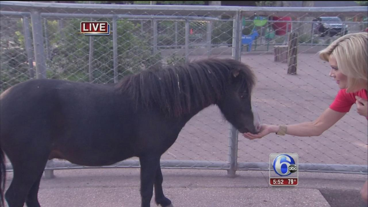 VIDEO: Cecily Tynan at the Zoo with Mini Horses