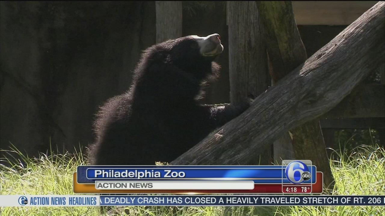 Philadelphia Zoo welcomes addition to bear family