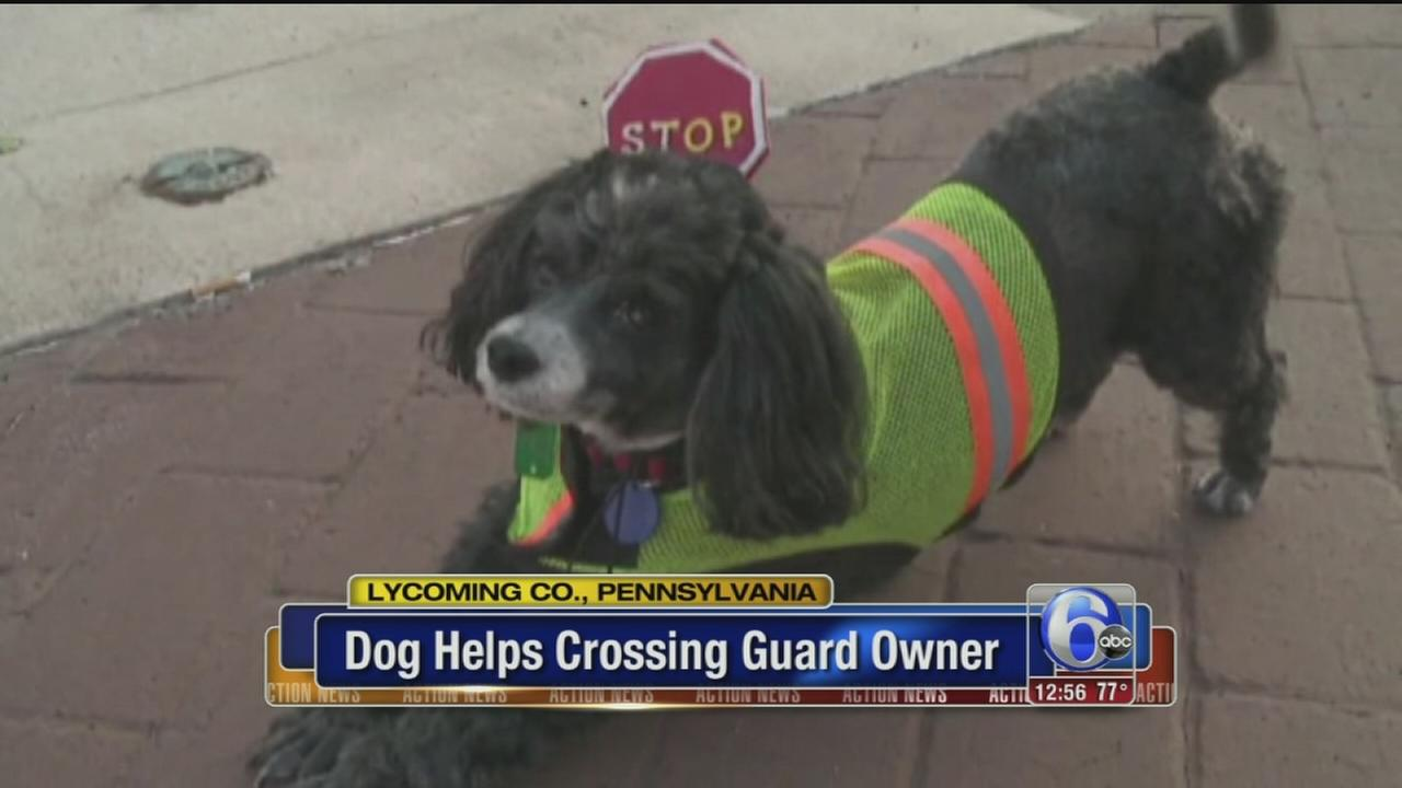 VIDEO: Dog crossing guard helps kids get to school safely
