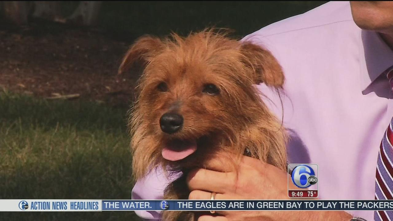 VIDEO: Shelter Me: Animal Adoption Center