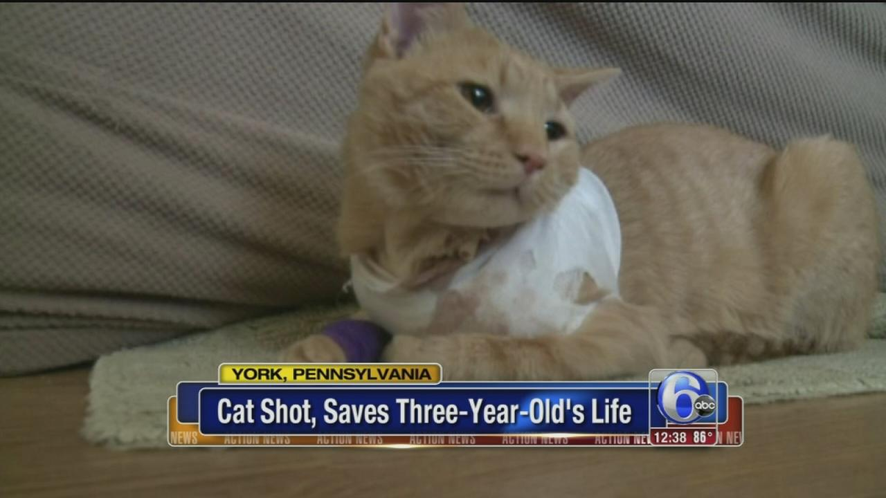 VIDEO: Pa. woman says cat shot, saved 3-year-old