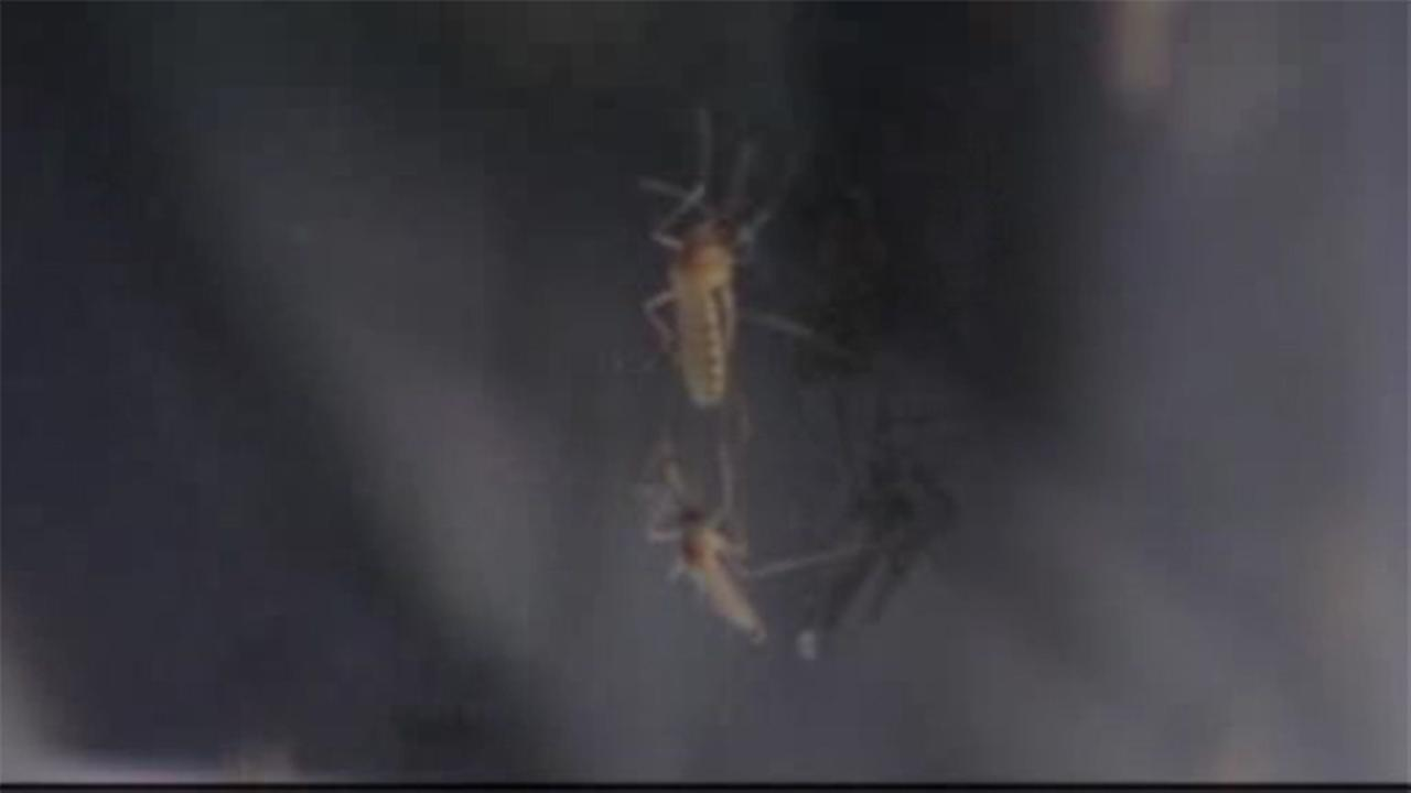 First Case of Human West Nile Virus Found in Magic Valley