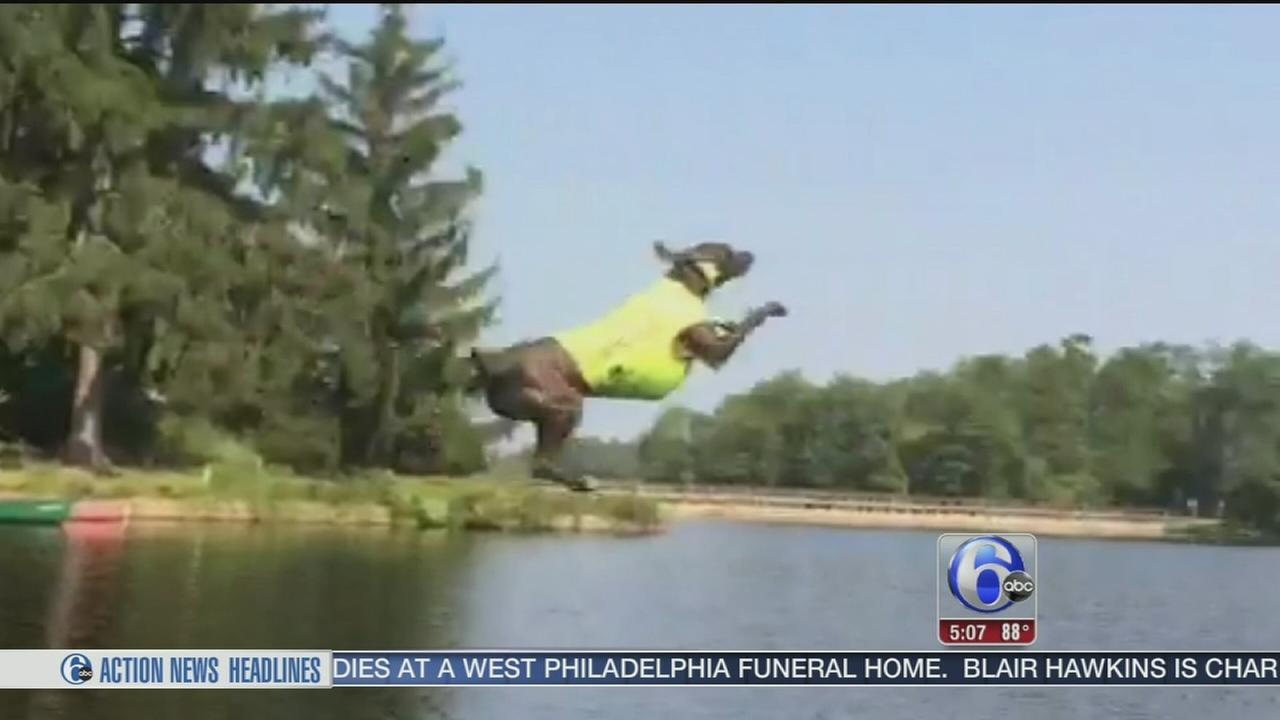 VIDEO: 2 NJ dogs are dock-diving champs
