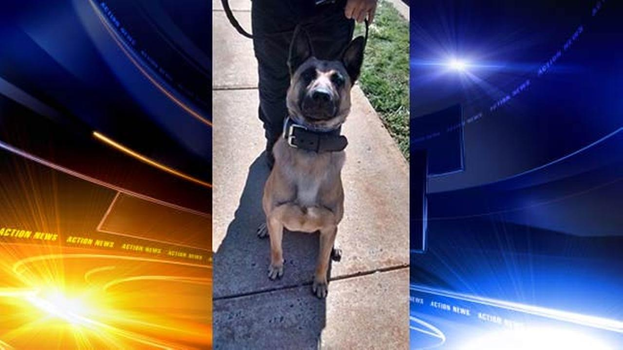 K-9 Officer injured during search of Reading school