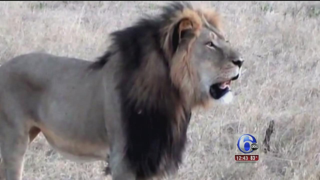 VIDEO: Walter Palmer speaks out