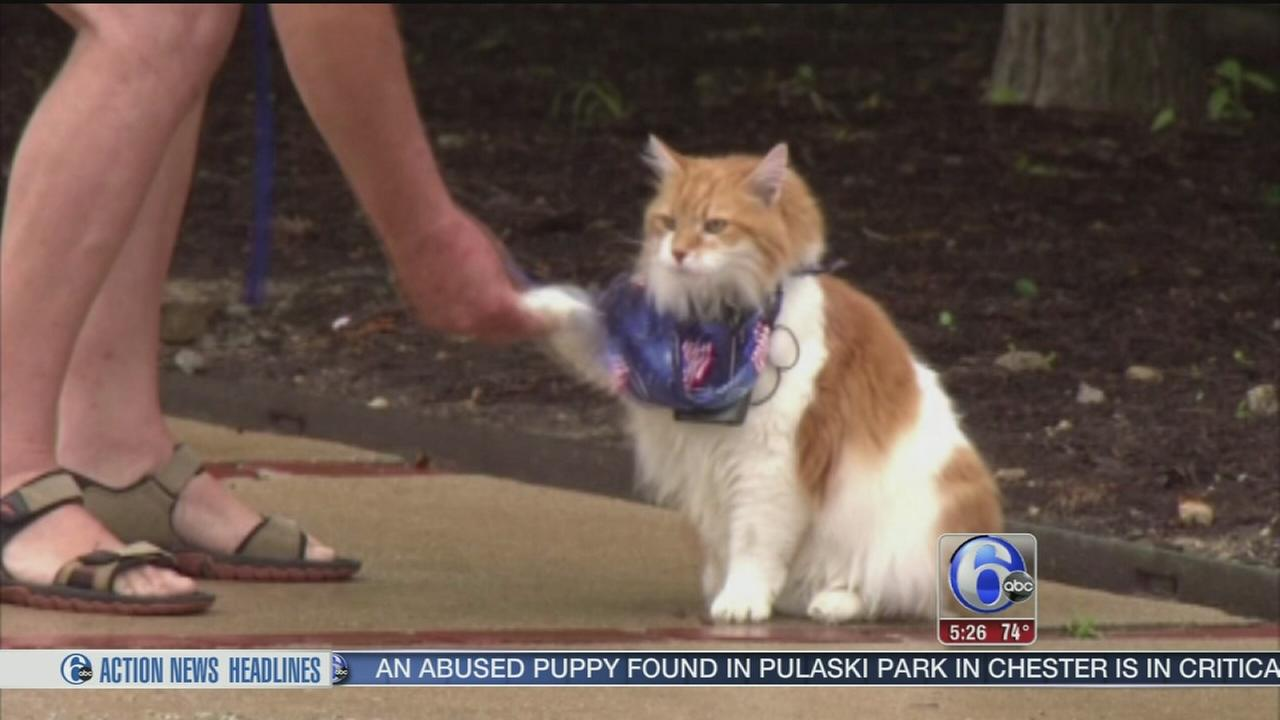 VIDEO: Meet Marley the puppy cat