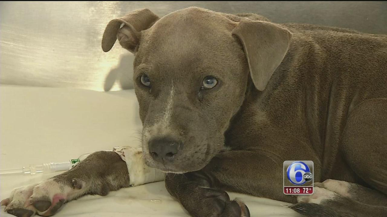 VIDEO: Duffy the dog update