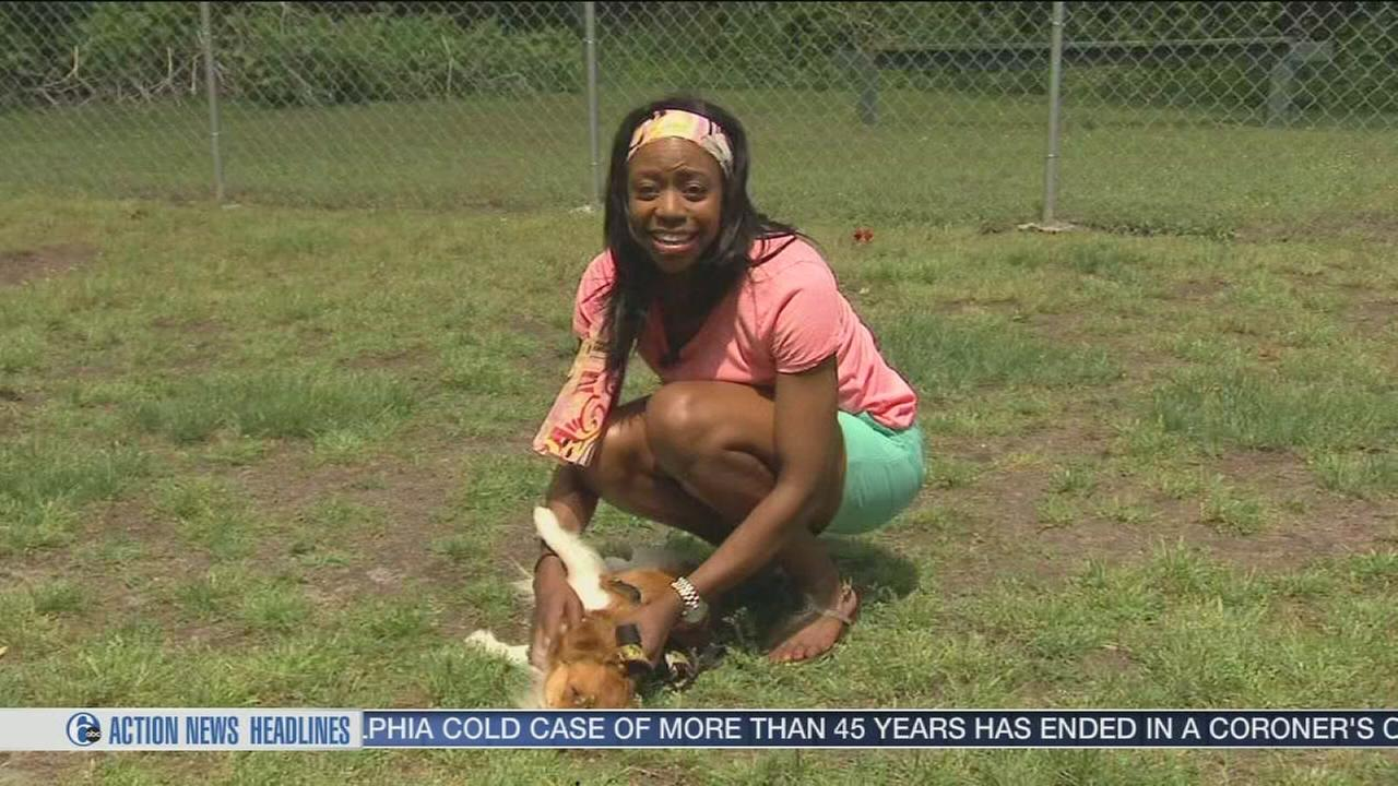 VIDEO: Shelter Me: Beacon Animal Rescue