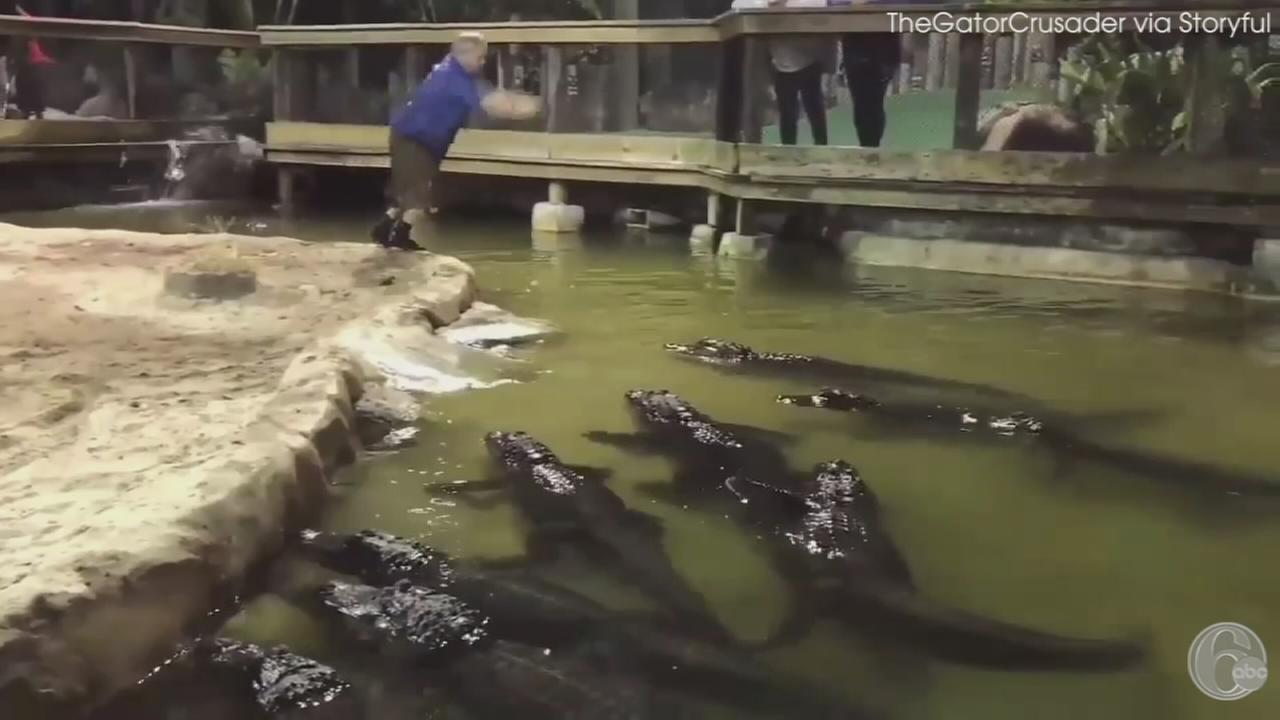 VIDEO: Man jumps into gator-filled pool