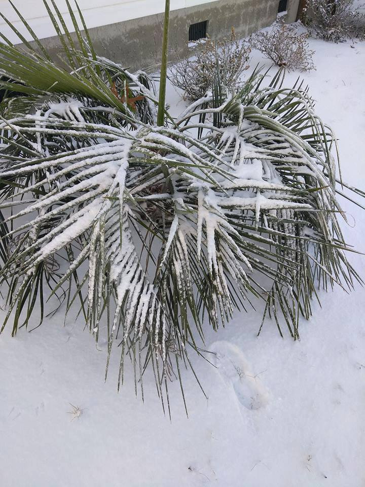 """<div class=""""meta image-caption""""><div class=""""origin-logo origin-image none""""><span>none</span></div><span class=""""caption-text"""">Snow at the North Carolina coast (WWAY/Cindy Owensby)</span></div>"""