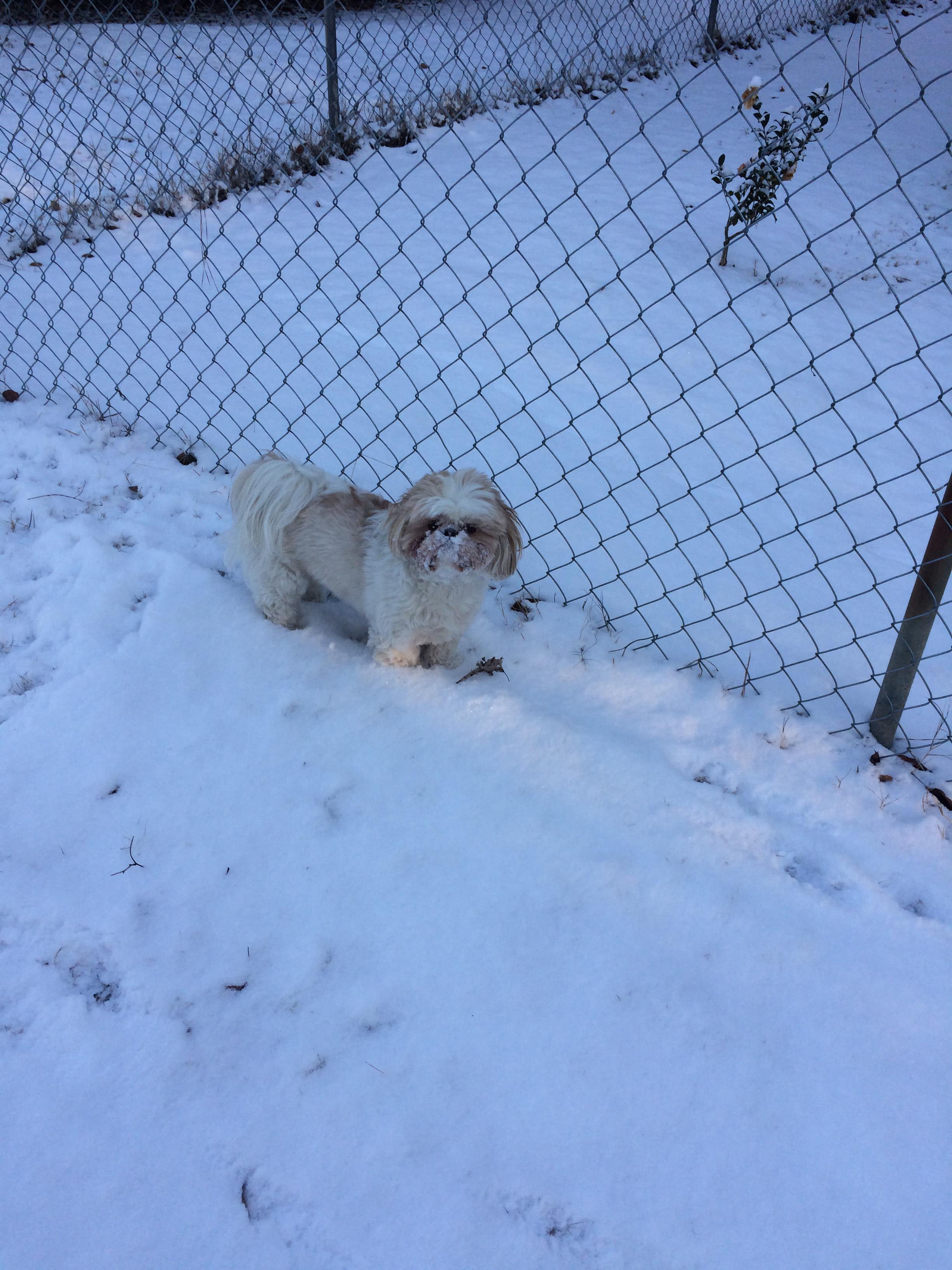 """<div class=""""meta image-caption""""><div class=""""origin-logo origin-image wtvd""""><span>WTVD</span></div><span class=""""caption-text"""">Ms Betsy loves plowing through the snow in Fayetteville. (Patricia Martin - ABC11 Eyewitness)</span></div>"""