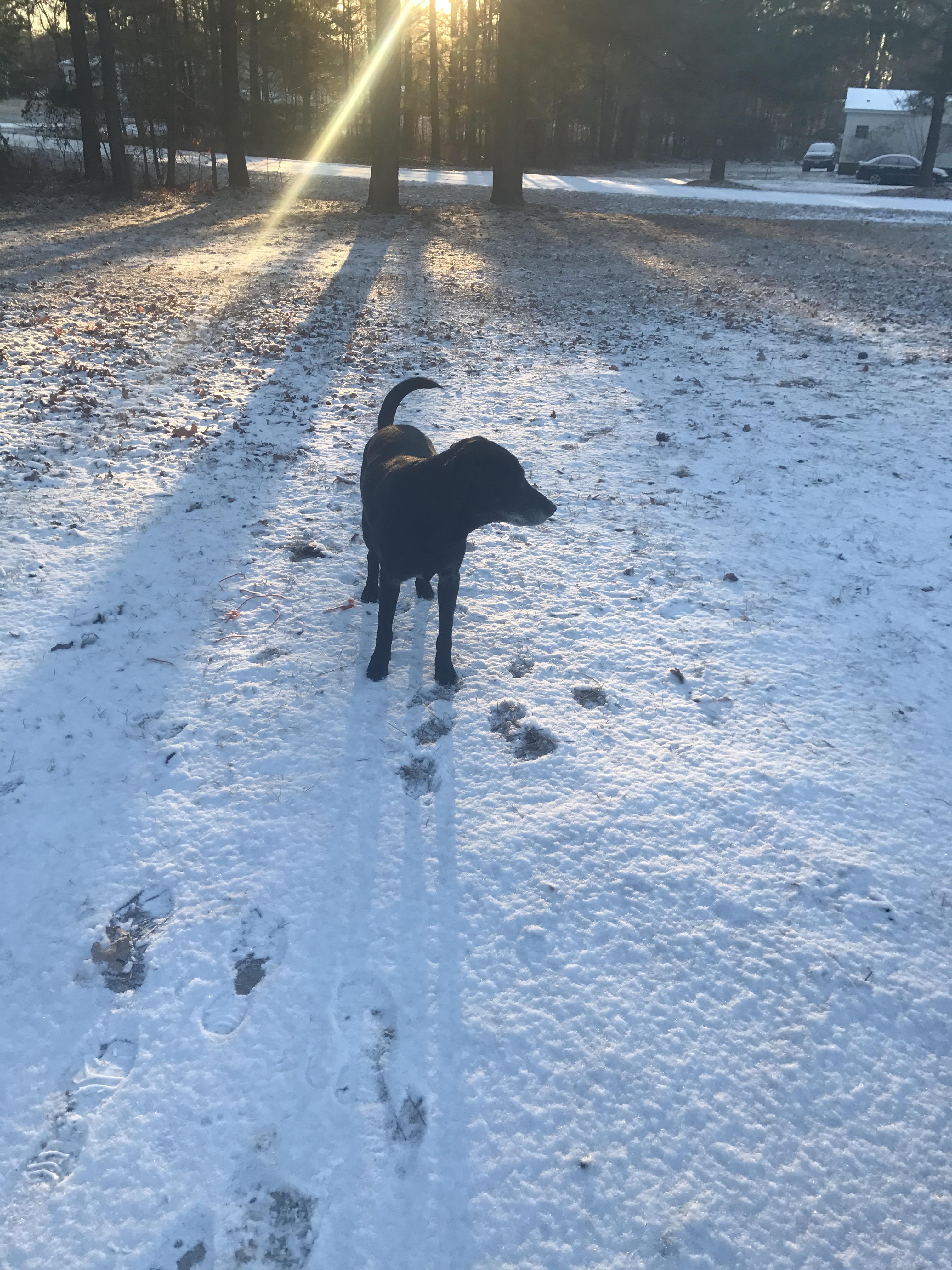 "<div class=""meta image-caption""><div class=""origin-logo origin-image wtvd""><span>WTVD</span></div><span class=""caption-text"">Lab playing in snow saying hi from lovingpaws dog boarding/walking in Garner. (Sarah - ABC11 Eyewitness)</span></div>"