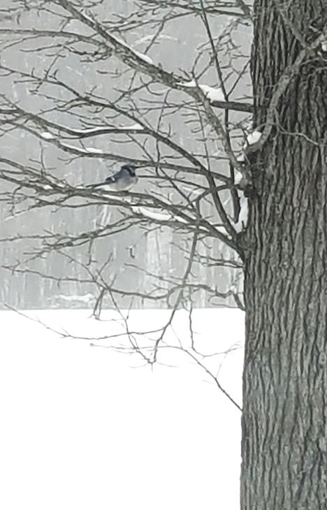 <div class='meta'><div class='origin-logo' data-origin='none'></div><span class='caption-text' data-credit=''>Eyewitness pictures of the snow</span></div>