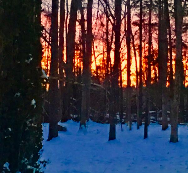 "<div class=""meta image-caption""><div class=""origin-logo origin-image wtvd""><span>WTVD</span></div><span class=""caption-text"">Pretty sunset in a wooded area of Hurdle Mills! (Barbara Martin-Dowell - ABC11 Eyewitness)</span></div>"