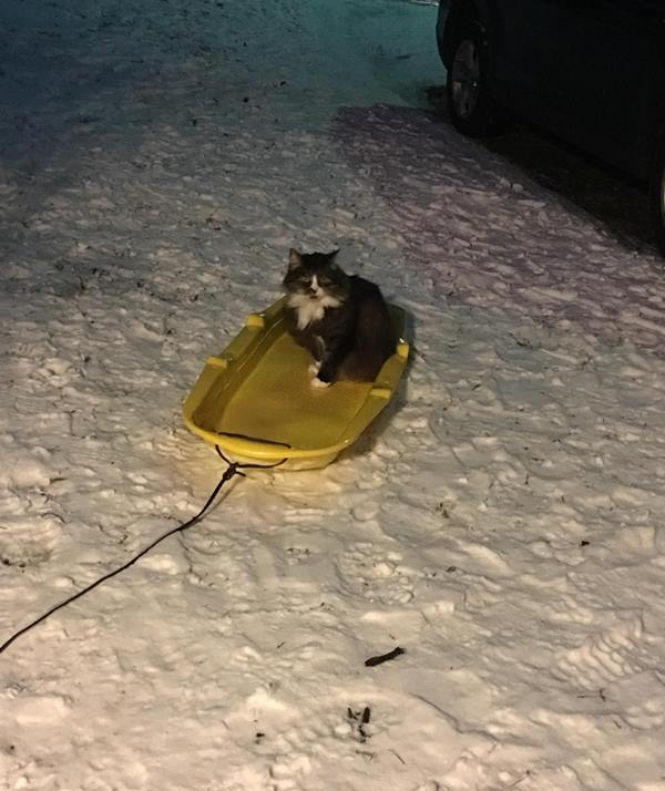 <div class='meta'><div class='origin-logo' data-origin='WTVD'></div><span class='caption-text' data-credit='Jeremy Collins - ABC11 Eyewitness'>Snookie the cat doesn't want the snow to melt!</span></div>