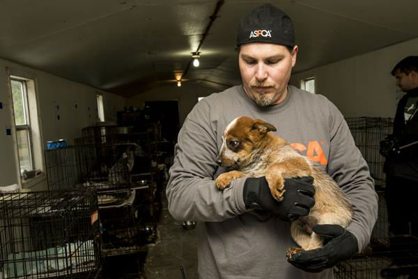 <div class='meta'><div class='origin-logo' data-origin='none'></div><span class='caption-text' data-credit='Photo/ASPCA'>Some of the animals rescued after a search warrant was served Wednesday, Jan. 27. The operation will take several days.</span></div>