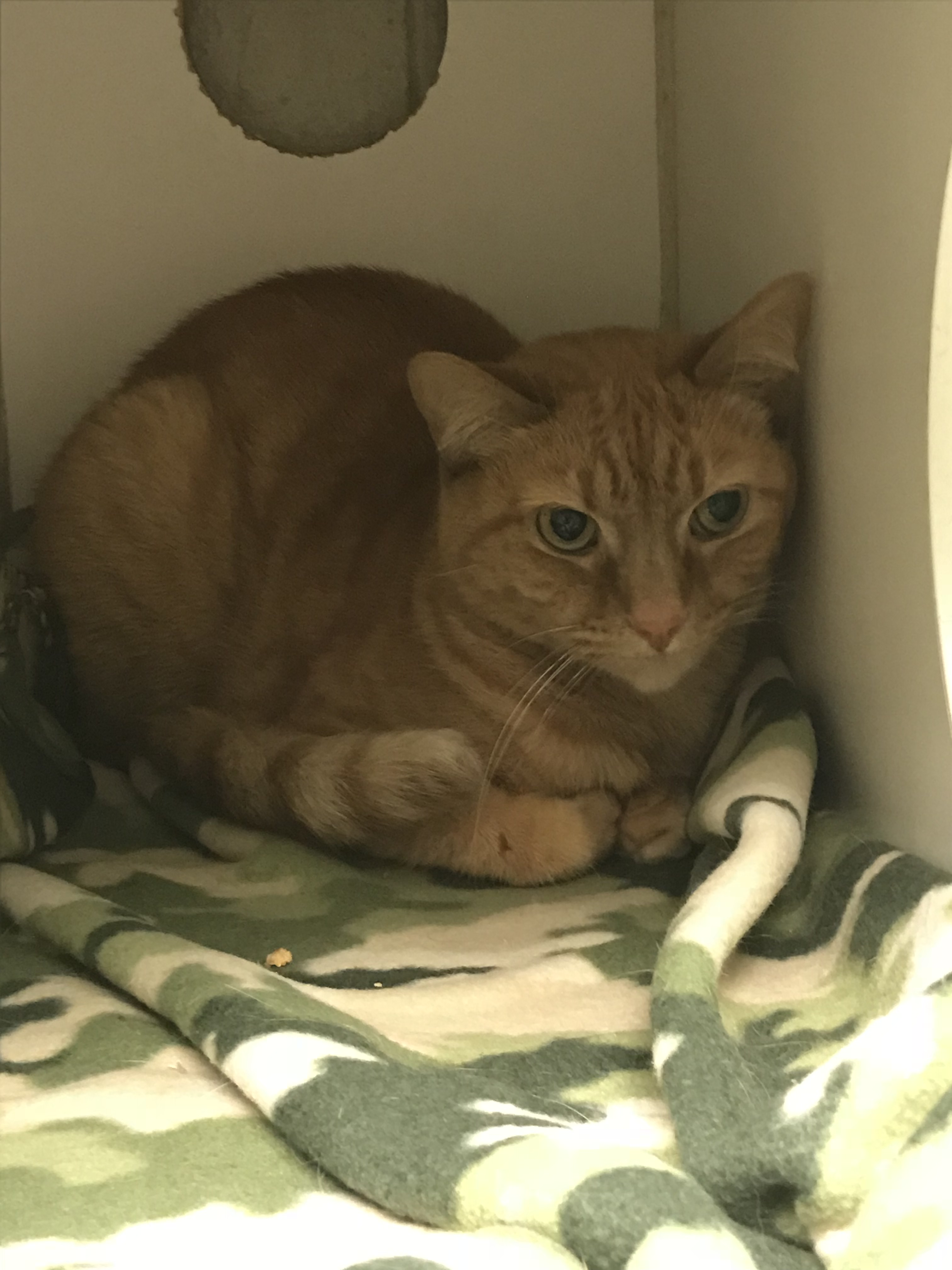 <div class='meta'><div class='origin-logo' data-origin='WTVD'></div><span class='caption-text' data-credit=''>Cats available at the Wake County Animal Center</span></div>