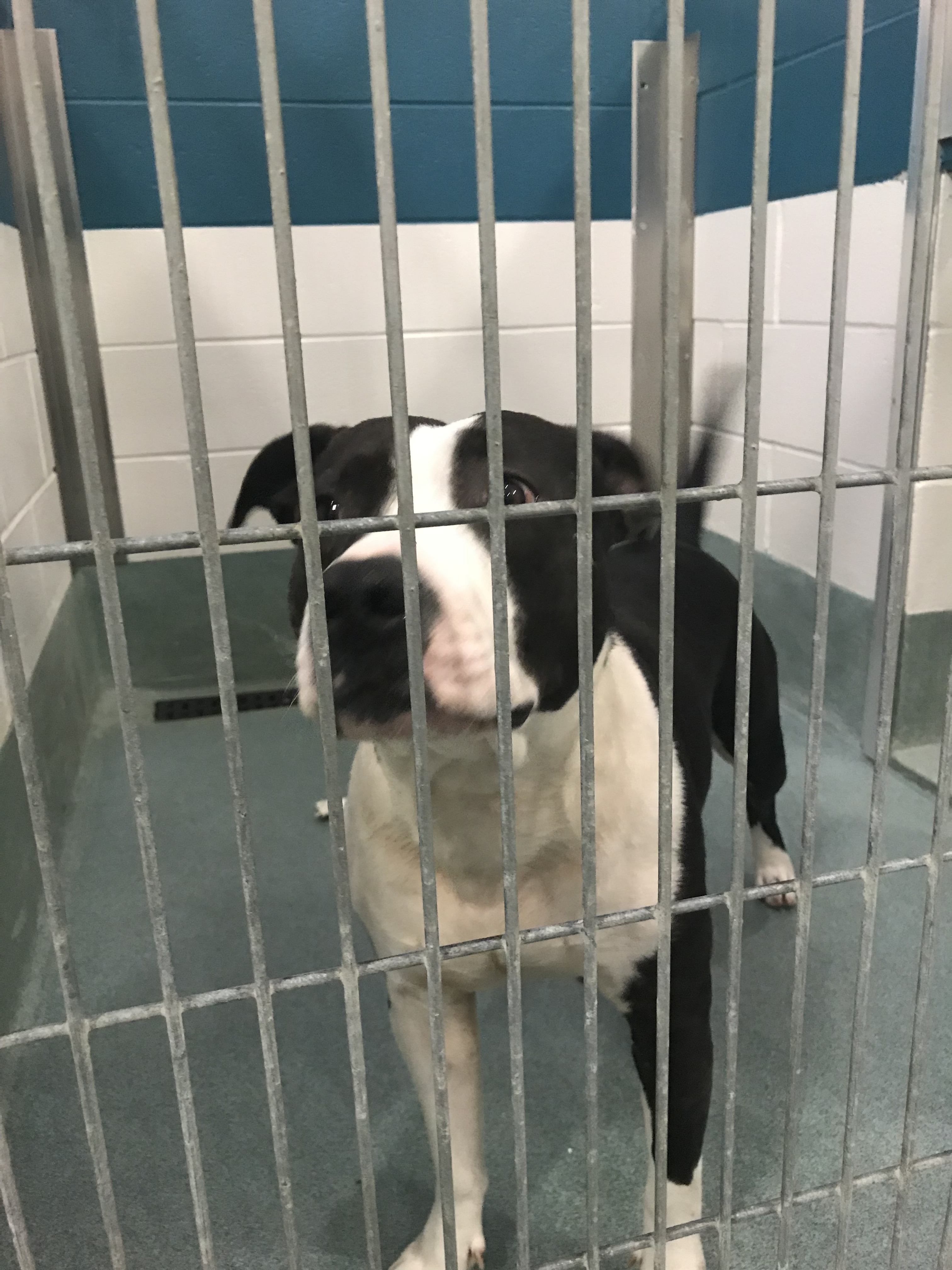 <div class='meta'><div class='origin-logo' data-origin='WTVD'></div><span class='caption-text' data-credit=''>Dogs available at the Wake County Animal Center.</span></div>