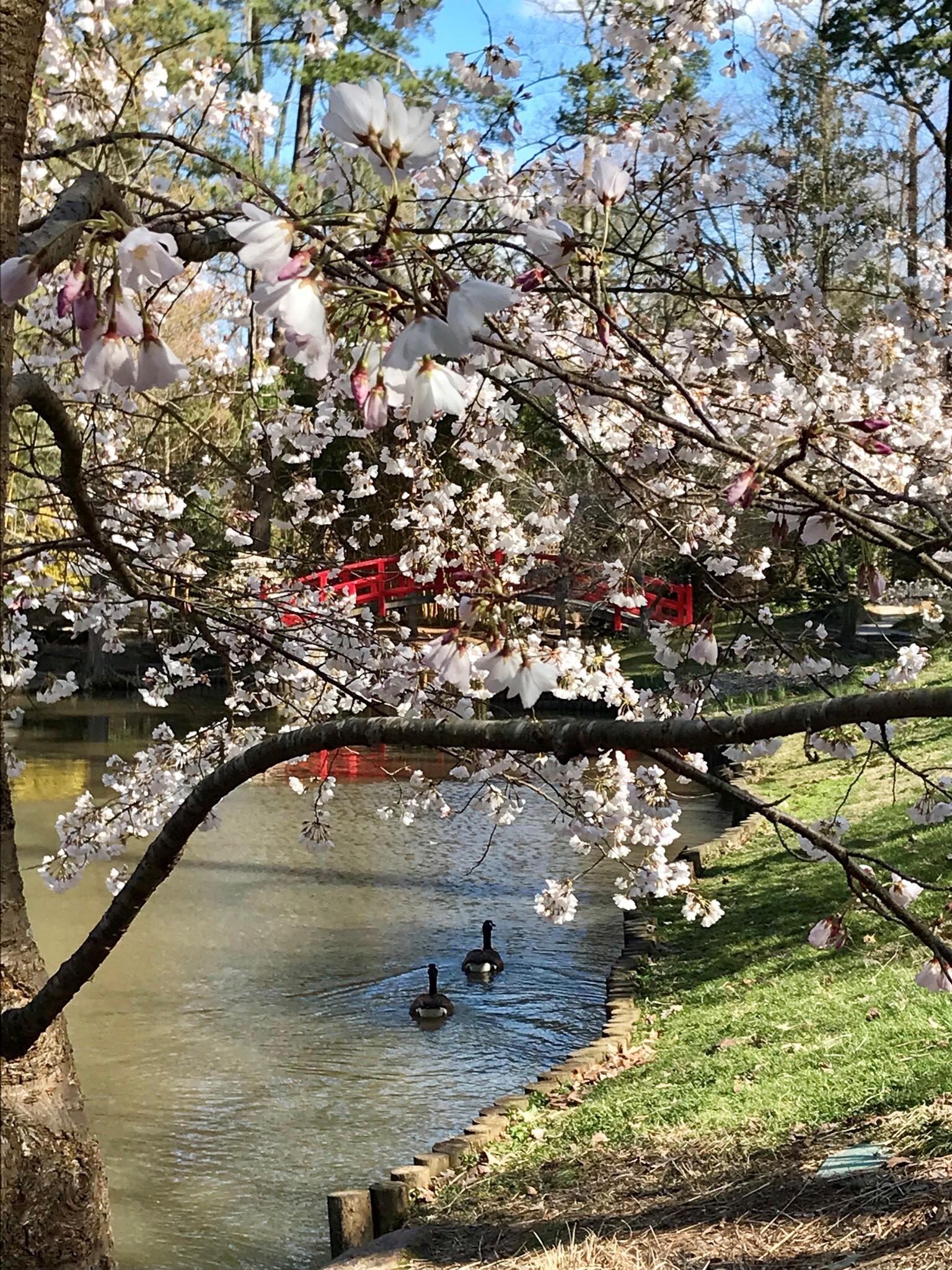 <div class='meta'><div class='origin-logo' data-origin='WTVD'></div><span class='caption-text' data-credit=''>Signs of spring at Duke Gardens</span></div>