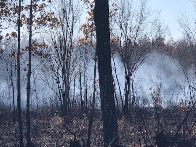 <div class='meta'><div class='origin-logo' data-origin='WTVD'></div><span class='caption-text' data-credit='Morgan Norwood'>A fire in Bladen County this week scorched more than 500 acres.</span></div>
