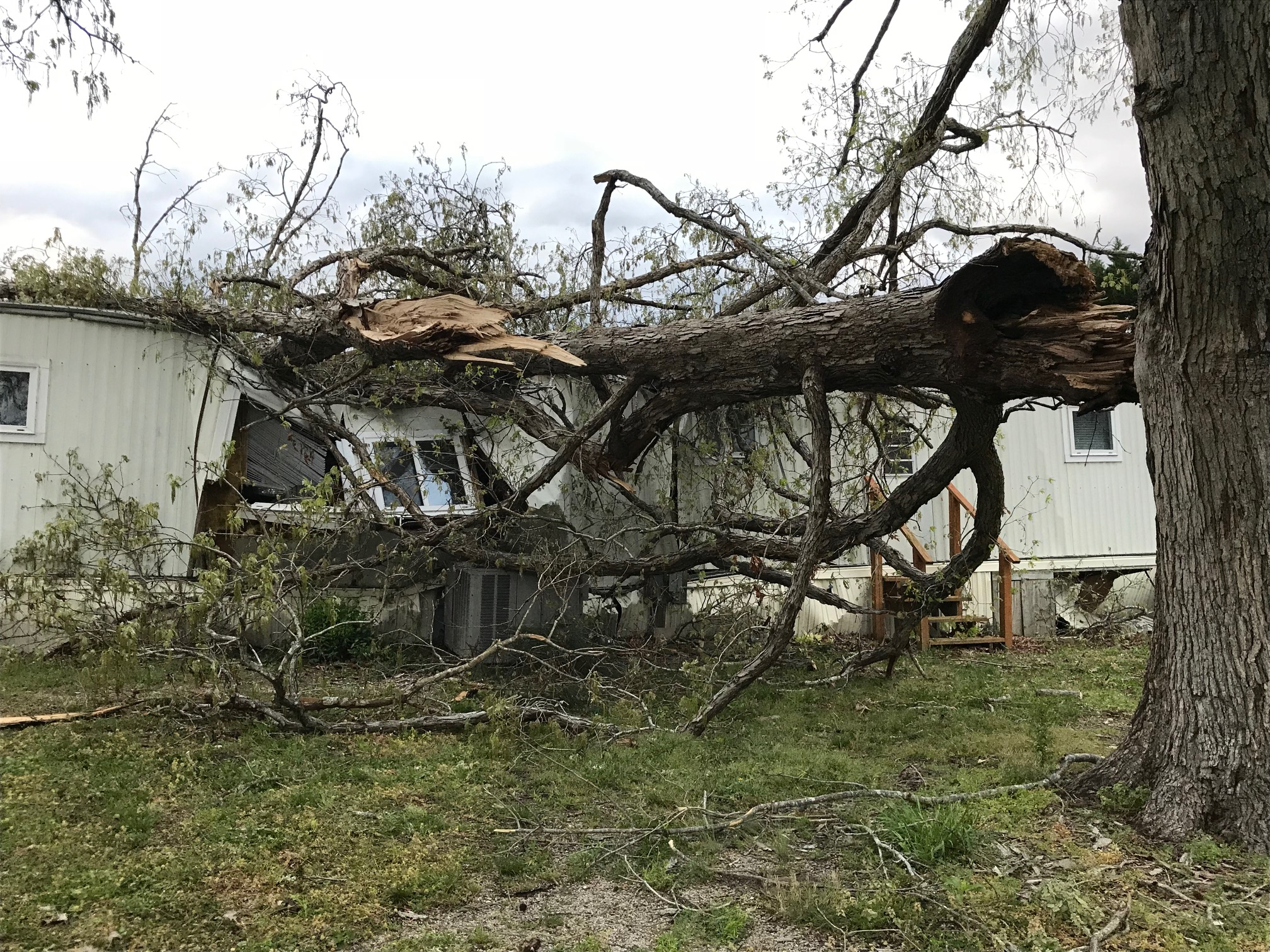 <div class='meta'><div class='origin-logo' data-origin='WTVD'></div><span class='caption-text' data-credit='Robert Judson'>A woman in Wendell had a narrow escape when a tree crashed into her Rees Lane home during the storm.</span></div>
