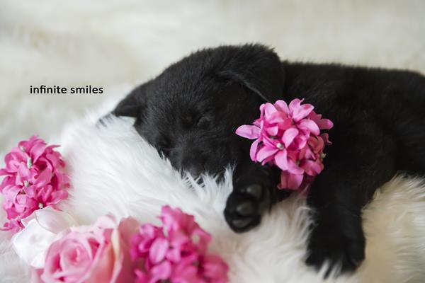 "<div class=""meta image-caption""><div class=""origin-logo origin-image none""><span>none</span></div><span class=""caption-text"">Kennedy Sartwell and Jake Terry announced their new puppy with a paw-dorable sex reveal photo shoot. (Credit: Infinite Smiles Photography)</span></div>"