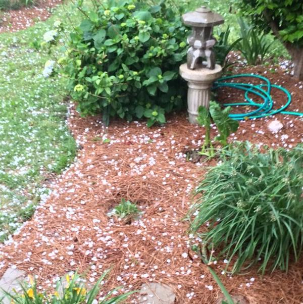 "<div class=""meta image-caption""><div class=""origin-logo origin-image wtvd""><span>WTVD</span></div><span class=""caption-text"">Hail in Fayetteville. (ABC11 Eyewitness)</span></div>"