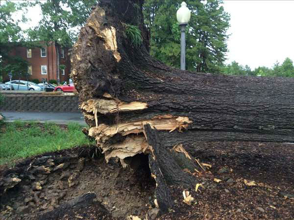A quick line of thunderstorms caused some problems around the Triangle. Parts of Durham were among the hardest hit. <span class=meta>WTVD Photo/Charlotte Fleming</span>