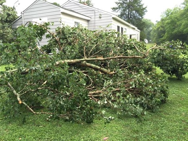 <div class='meta'><div class='origin-logo' data-origin='WTVD'></div><span class='caption-text' data-credit='ABC11 Eyewitness'>A tree falls on a house in Kittrell.</span></div>