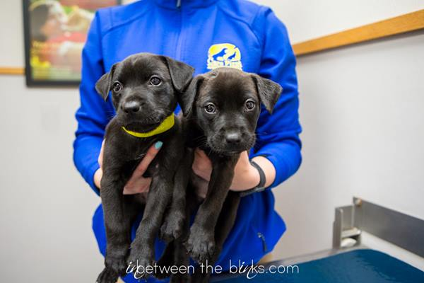 <div class='meta'><div class='origin-logo' data-origin='WTVD'></div><span class='caption-text' data-credit='Courtesy of InBetween the Blinks Photography'>The burned puppies are on the mend.</span></div>