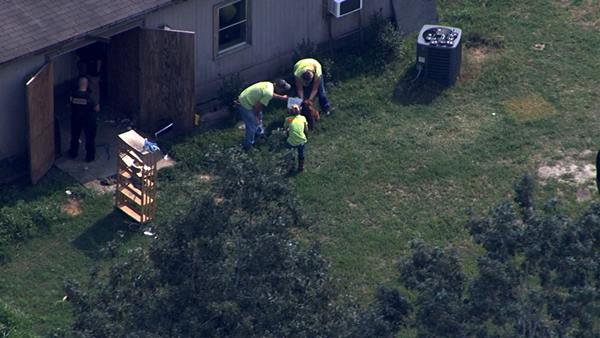 <div class='meta'><div class='origin-logo' data-origin='WTVD'></div><span class='caption-text' data-credit='Chopper 11 HD'>Officials comb the Raeford property where approximately 100 animals were found living in poor conditions</span></div>