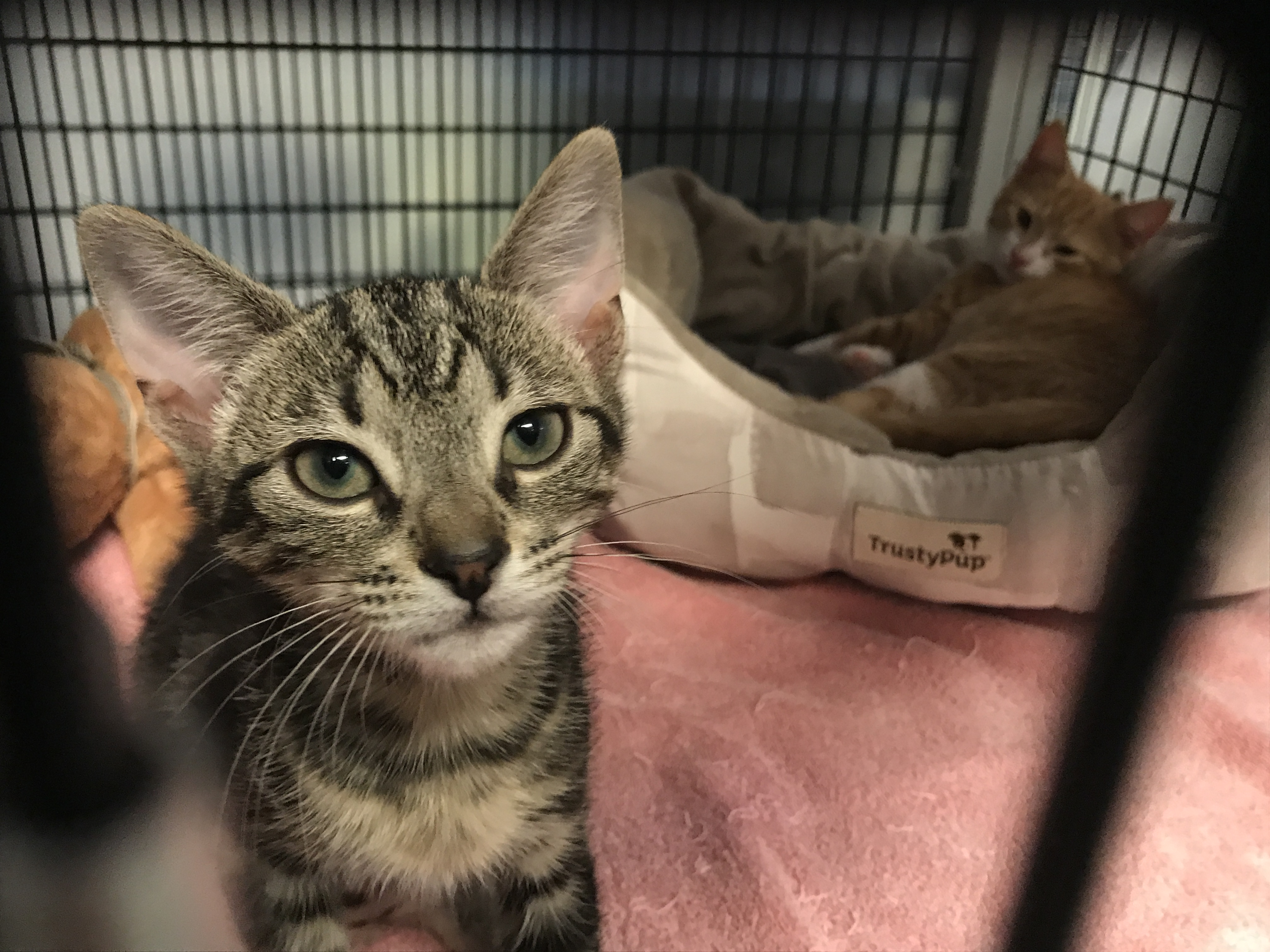 <div class='meta'><div class='origin-logo' data-origin='none'></div><span class='caption-text' data-credit='Credit: Safe Haven for Cats'>Yarmouth</span></div>
