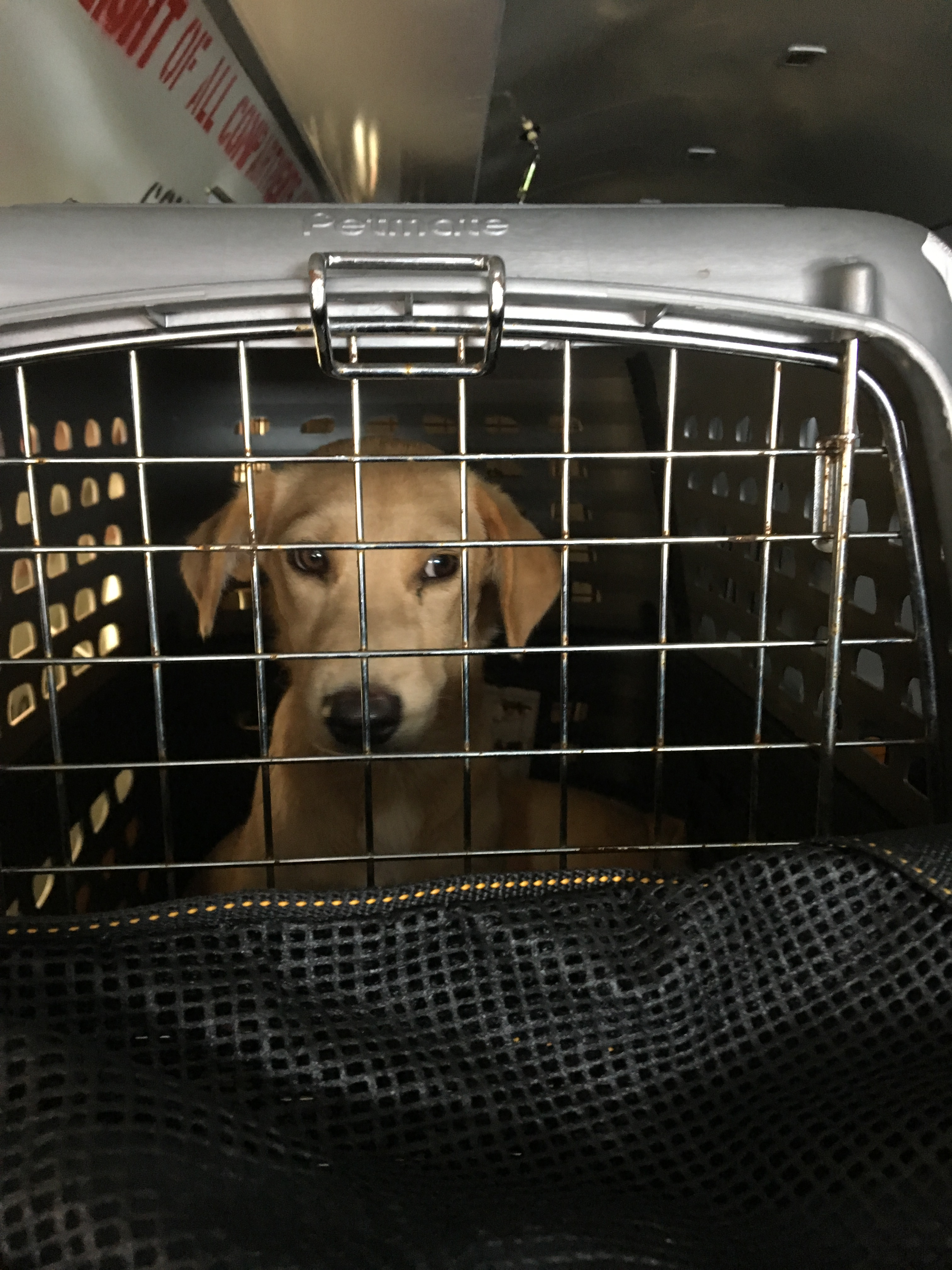 """<div class=""""meta image-caption""""><div class=""""origin-logo origin-image none""""><span>none</span></div><span class=""""caption-text"""">Dozens of homeless pets are being transported from Puerto Rico to the SPCA of Wake County (Credit: Humane Society of the United States)</span></div>"""