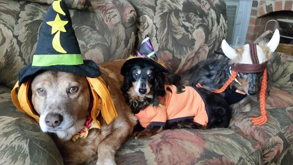 <div class='meta'><div class='origin-logo' data-origin='none'></div><span class='caption-text' data-credit=''>Halloween pups - Marilyn Kille</span></div>