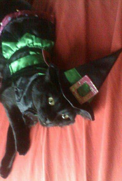 <div class='meta'><div class='origin-logo' data-origin='none'></div><span class='caption-text' data-credit=''>Kitty as witch from Wizabiff Moody</span></div>