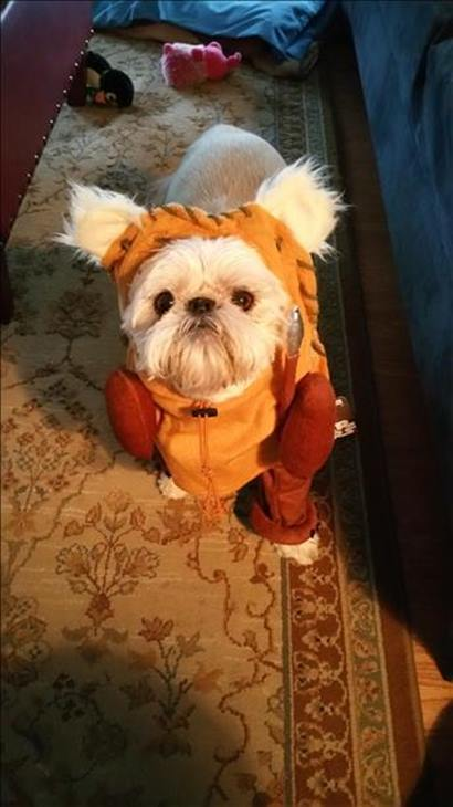 <div class='meta'><div class='origin-logo' data-origin='none'></div><span class='caption-text' data-credit=''>Cheekie the Ewok - sent in by Cheryl Mercs</span></div>
