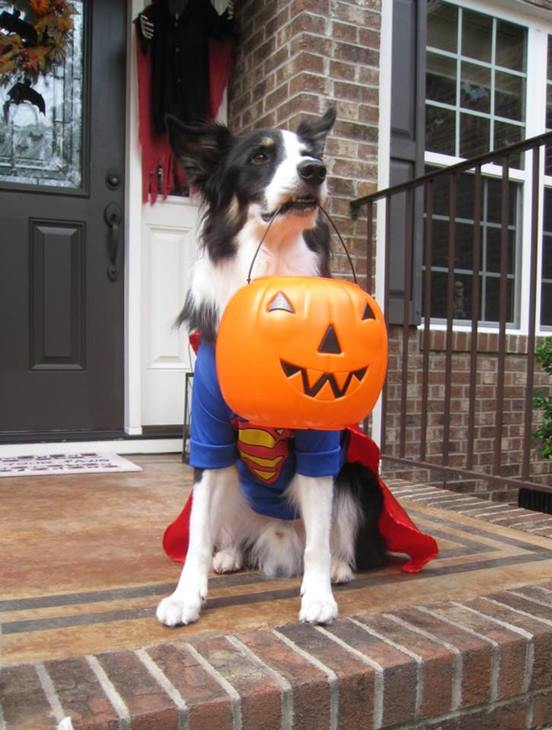 <div class='meta'><div class='origin-logo' data-origin='none'></div><span class='caption-text' data-credit=''>Super Dog - sent in by Connie Tegg</span></div>