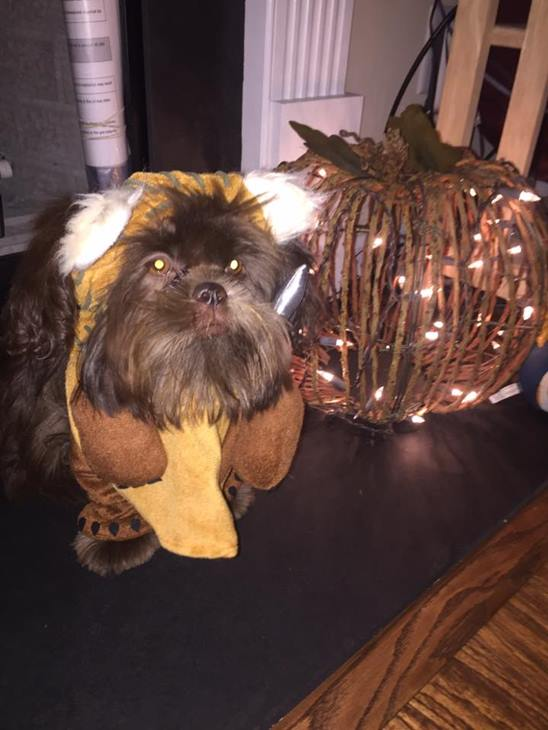 <div class='meta'><div class='origin-logo' data-origin='none'></div><span class='caption-text' data-credit=''>Coco the Ewok - sent in by Liz Suzanne</span></div>