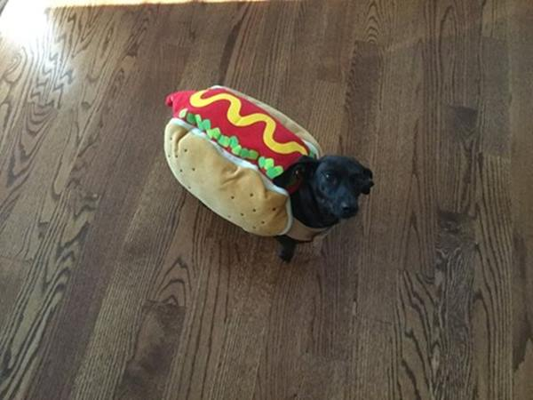 <div class='meta'><div class='origin-logo' data-origin='none'></div><span class='caption-text' data-credit=''>Nala the hot dog- sent in by Laurel Rose</span></div>