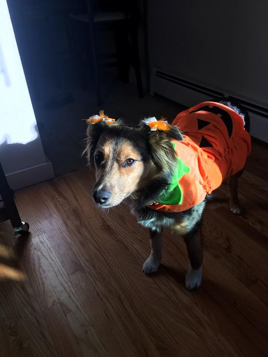 <div class='meta'><div class='origin-logo' data-origin='none'></div><span class='caption-text' data-credit=''>Stella the pumpkin - sent in by Nicholas Pappianou and Katie Childers</span></div>