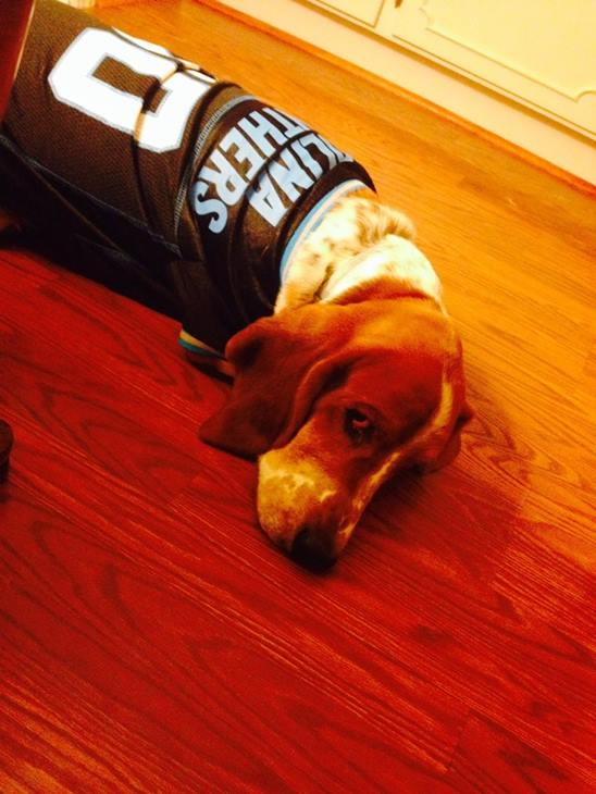 <div class='meta'><div class='origin-logo' data-origin='none'></div><span class='caption-text' data-credit=''>Banjo in Cam Newton jersey- sent in by Miriam Jarman Gunter</span></div>