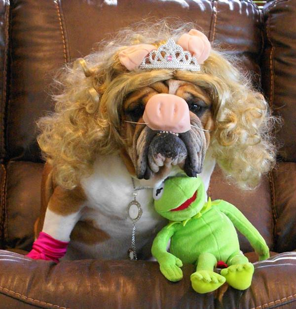 <div class='meta'><div class='origin-logo' data-origin='none'></div><span class='caption-text' data-credit=''>Bubba as Miss Piggy sent in by Cassie Driver</span></div>
