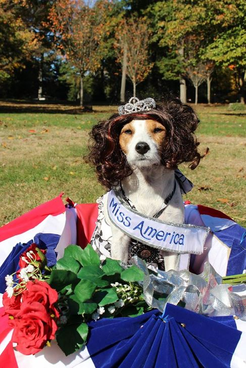 <div class='meta'><div class='origin-logo' data-origin='none'></div><span class='caption-text' data-credit=''>Lunchbox as Miss America - Lunchbox the Wonderpup</span></div>