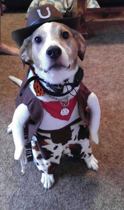 <div class='meta'><div class='origin-logo' data-origin='none'></div><span class='caption-text' data-credit=''>Mr. Re the cowboy beagle mix - Alison Blizzard</span></div>
