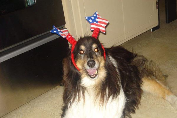 <div class='meta'><div class='origin-logo' data-origin='none'></div><span class='caption-text' data-credit=''>4th of July collie - chatterbox8522</span></div>