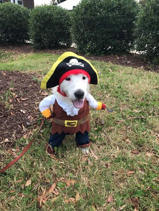 <div class='meta'><div class='origin-logo' data-origin='none'></div><span class='caption-text' data-credit=''>Pirate dog - Kathleen Makena</span></div>