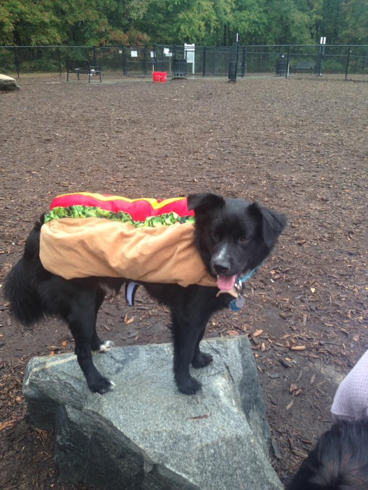 "<div class=""meta image-caption""><div class=""origin-logo origin-image none""><span>none</span></div><span class=""caption-text"">""Mogley the hotdog."" (Credit: Tanya Summers)</span></div>"