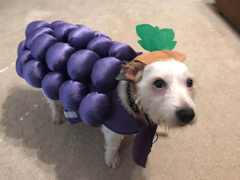 "<div class=""meta image-caption""><div class=""origin-logo origin-image none""><span>none</span></div><span class=""caption-text"">Betty looks grape today, doesn't she? Happy Halloween! (Credit: Nicole Hare-Hill)</span></div>"